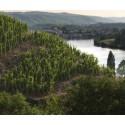► Côtes du Rhône